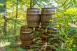 Old wooden barrels with iron rims in the forest