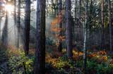 Sunrays through the trees