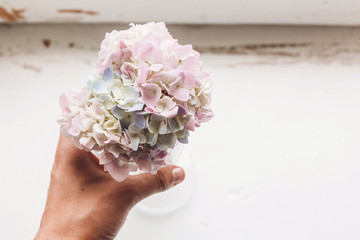 Hand holding vintage glass with beautiful hydrangea flowers on rustic white wood of old windowsill. Countryside still life. Happy mothers day. Creative tender spring image. © sonyachny