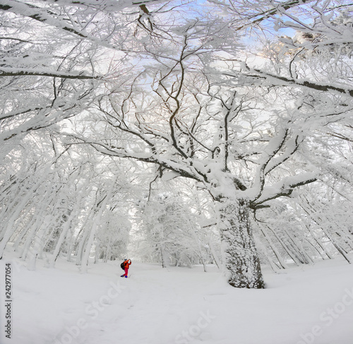 snowy forest and sky in perspective