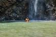 sportlicher junger Mann unter einem Wasserfall in Hawaii, Kauai