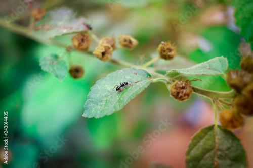 Foto Murales Hormiga sobre hoja verde