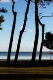 coast  in medulin, croatia  - 243019077