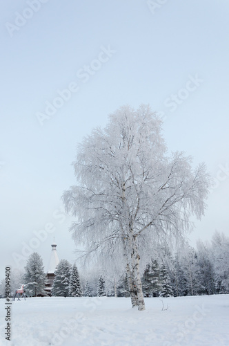 Snowy birch tree in the country - 243049400