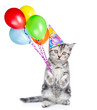 Cat in birthday hat holding balloons. isolated on white background