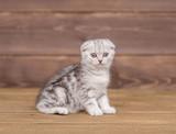 Tabby kitten on wooden background