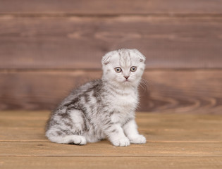 Tabby kitten on wooden background