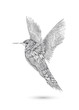 gezeichneter Kolibri