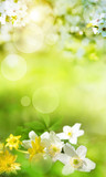 Spring scenery with smal flowers - 243100847