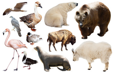 north american animals isolated