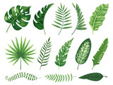 Exotic tropical leaves. Monstera plant leaf, banana plants and green tropics palm leaves isolated vector illustration set - 243118488