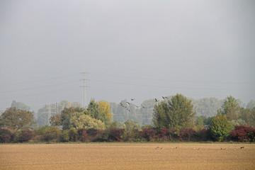Herbstlandschaft mit Wildgänsen
