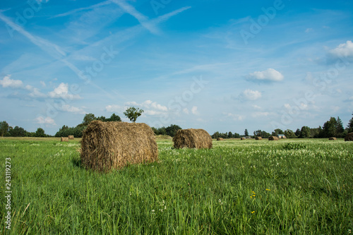 Round hay bales on a green meadow with white flowers and clouds on a sky