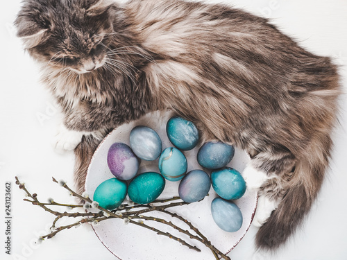 Leinwandbild Motiv Easter eggs painted with bright colors and a charming kitten on a white background. Top view, close-up, isolated. Happy Easter. Preparation for the holiday