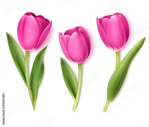 Set of decorative flowers isolated on white background. Vector pink tulip for spring holidays decor.