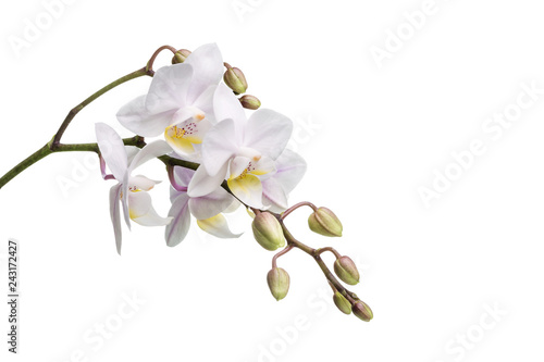 Image with orchid - 243172427