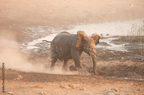 Elefanten Etosha Namibia