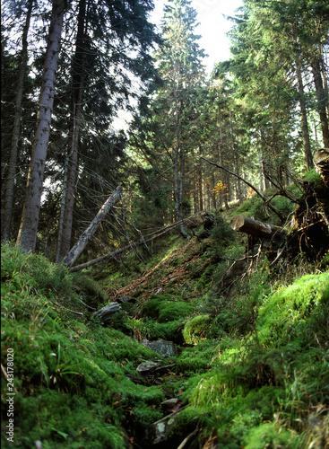 Bialskie mountains, Poland