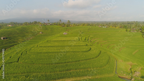 rice terrace and agricultural land with crops. aerial view farmland with rice fields agricultural crops in countryside Indonesia,Bali