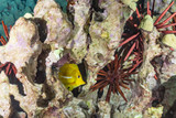 Fish and urchins in coral reef