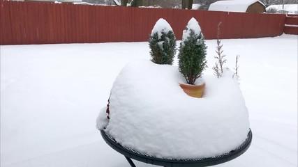 Deep snow fall around plants in backyard  © Mark