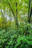 Vegetation of Hawaii