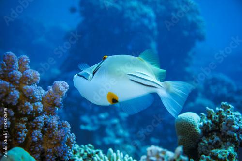 obraz PCV Underwater world of fish