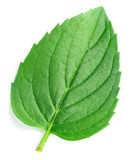 Fresh mint isolated Clipping Path - 243198481