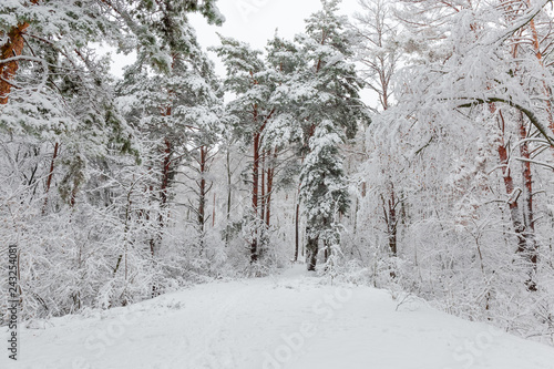 Fragment of winter forest during a heavy snowfall