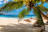 Tropical beach with palms and turquoise sea in Seychelles island.