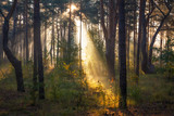 Morning. Forest. The sun. Sun rays. Nature. Landscape.