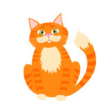 Beautiful cute red cat isolated on white.