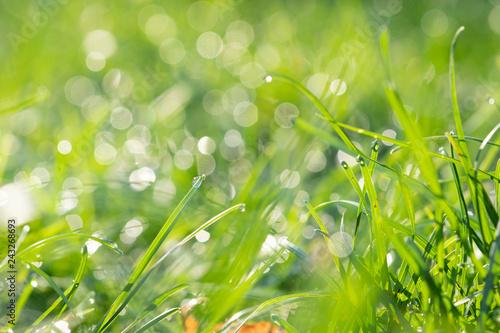 Leinwandbild Motiv Fresh morning dew on spring grass