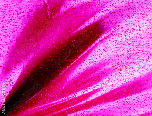 Rain drops on pink background. Water drops pink texture. - 243283024