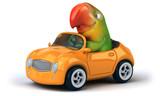 Fun parrot - 243286842