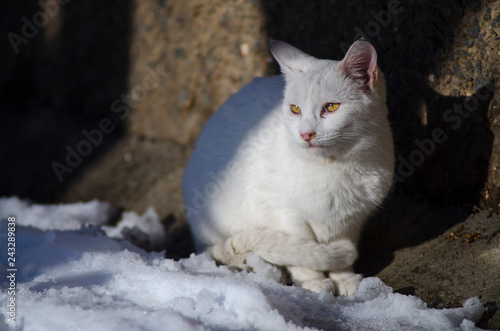 homeless street cat sitting in the snow
