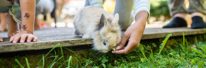Wide view image of a hand of a child feeding pet baby rabbit © Gajus