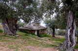 stone house among old olive trees