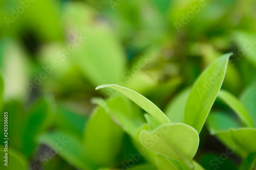Closeup nature green for background/texture leaf blurred and green natural plants branch in garden at summer under sunlight concept design wallpaper view with copy space add text.