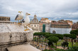 Seagulls in Rome on a rooftop with Roman forum in the background