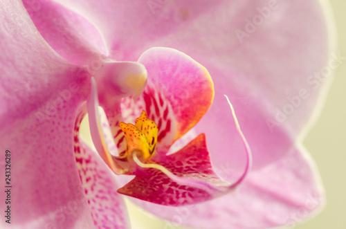 Floral - 243326289