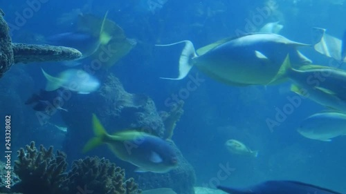 Colourful tropical fish swimming underwater.