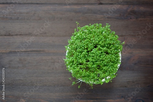 sprouts garden cress in a bowl