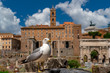 seagull in imperial forums rome
