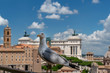 Quadro seagull in imperial forums rome
