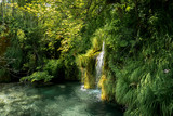 small cascade in a green forest with clear water