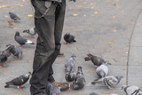 Cropped image of Man and lots of pigeon birds at SoHo, New York - 243404832