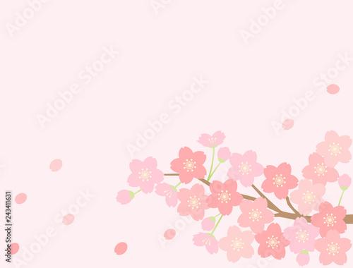 さくら24 桜