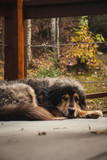 Sleeping Dog in the Country 2