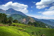 Hills and tee plantations in Kerala